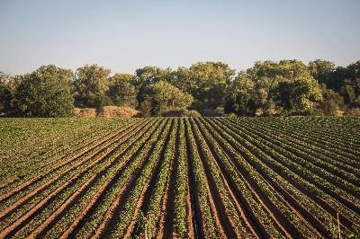 Image of Agricultural land in San Joaquin County